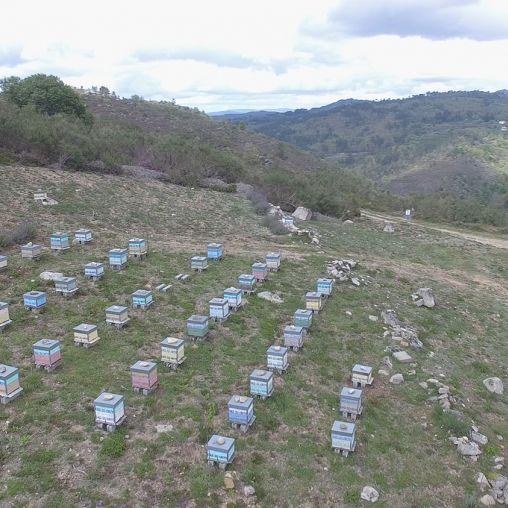 Nuestras Colmenas - Miel ecológica Montes do Xures