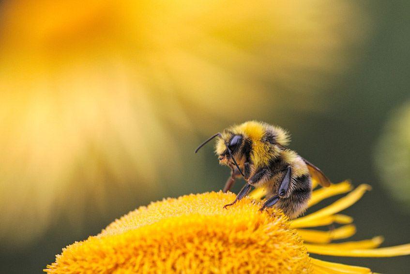 Análisis Miel ecológica Montes do Xurés